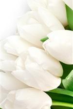 미리보기 iPhone 배경 화면 흰색 튤립 꽃, 잎