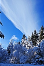 Preview iPhone wallpaper Winter, thick snow, spruce, trees