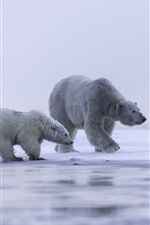 Preview iPhone wallpaper Alaska, Arctic, polar bear family, cold
