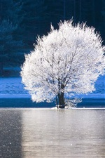 Preview iPhone wallpaper Alpes-Maritimes, France, forest, lake, ice, frost, white tree, winter