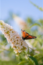 Preview iPhone wallpaper Butterfly on the flowers, blurring background