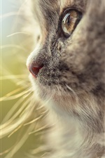Preview iPhone wallpaper Cat face side view, whiskers