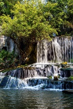 Forest, river, waterfalls, stones
