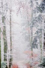 Preview iPhone wallpaper Forest trail, trees, white frost, fog, autumn