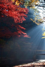 Preview iPhone wallpaper Forest, trees, bridge, sun rays, autumn