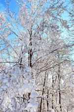 Preview iPhone wallpaper Forest, trees, winter, thick snow, blue sky