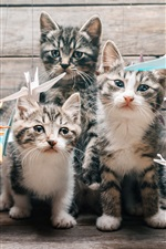 iPhone обои Четыре котята, усы, смотрит, бумажные птицы, оригами