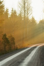 Preview iPhone wallpaper Morning, forest, road, fog, sunrise