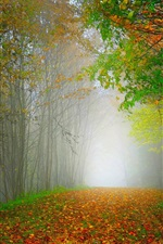 Preview iPhone wallpaper Morning, nature scenery, forest, trees, colorful leaves, road
