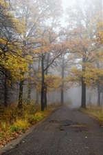 Preview iPhone wallpaper Morning, road, forest, autumn, fog