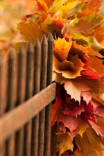 Preview iPhone wallpaper Nature, autumn, leaves, bokeh, fence