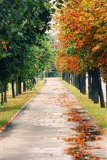 Preview iPhone wallpaper Nature landscapes, park, trees, road, autumn