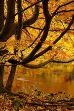 Preview iPhone wallpaper North Yorkshire, England, tree, yellow leaves, pond, autumn