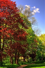 Park, trees, grass, sunny, autumn