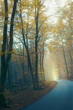 Preview iPhone wallpaper Road, forest, trees, fog, morning, autumn