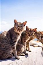 Preview iPhone wallpaper Summer, cats, sunshine