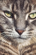 Preview iPhone wallpaper Wild cat, whiskers, eyes, face