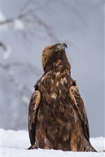 Preview iPhone wallpaper Winter, snow, raptors, two eagles