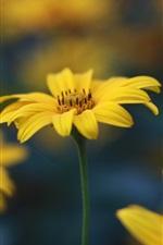 Preview iPhone wallpaper Yellow flowers, grass, bokeh