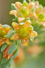 Preview iPhone wallpaper Yellow-orange flowers, blur background