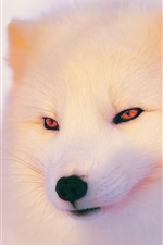 Preview iPhone wallpaper Arctic Fox in winter, face