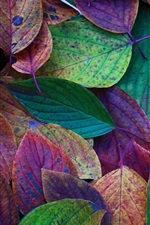 Preview iPhone wallpaper Autumn, leaves, green, purple, red