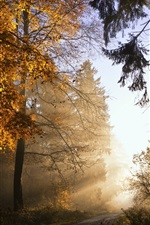 Autumn, trees, leaves, sunlight