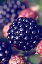 Preview iPhone wallpaper Blackberry, berries, plant close-up