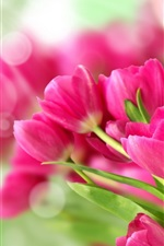 Preview iPhone wallpaper Bouquet pink flowers, tulips, sunlight