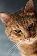 Preview iPhone wallpaper Brown color cat, whiskers, bokeh
