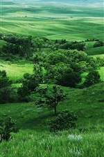 Preview iPhone wallpaper Green nature, grass, trees, slope