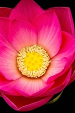 Preview iPhone wallpaper Pink lotus flower macro, black background