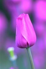 Preview iPhone wallpaper Pink tulip flowers, stem, petals, bokeh