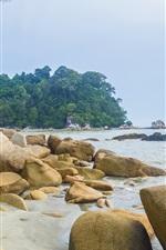 Sea, coast, beach, rocks, trees