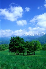 Preview iPhone wallpaper Trees, mountains, grass, sky, clouds, valley