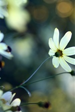 White flowers, plants, bokeh