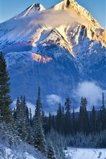 Preview iPhone wallpaper Alberta, Banff National Park, Canada, mountains, trees, snow, road