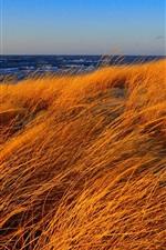 Preview iPhone wallpaper Beach, sea, grass, autumn, wind