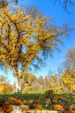 Beautiful autumn, trees, grass, yellow leaves