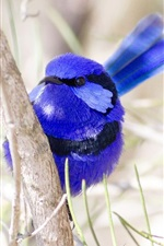 Preview iPhone wallpaper Bird close-up, blue feathers