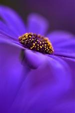 Preview iPhone wallpaper Blue flower close-up, petals, blurry