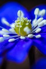 Preview iPhone wallpaper Blue flower close-up, petals, stamens