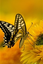 Preview iPhone wallpaper Butterfly, wings, sunflower, petals