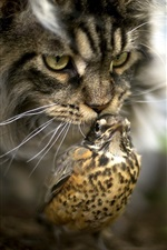 Cat and bird, bokeh
