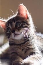 미리보기 iPhone 배경 화면 귀여운 아기 고양이, 볼, 눈, 눈부심