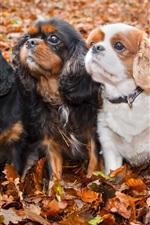 iPhone fondos de pantalla Cuatro perros lindos, hojas, otoño