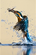 Preview iPhone wallpaper Kingfisher beautiful dance, water, splash, catch fish