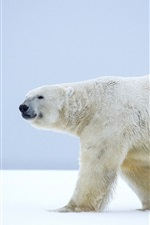 Preview iPhone wallpaper Lonely polar bear, walk in the snow, Alaska, winter