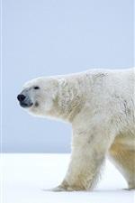 urso polar solitário, andar na neve, Alaska, inverno