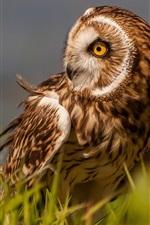 Preview iPhone wallpaper Marsh, owl, bird, grass